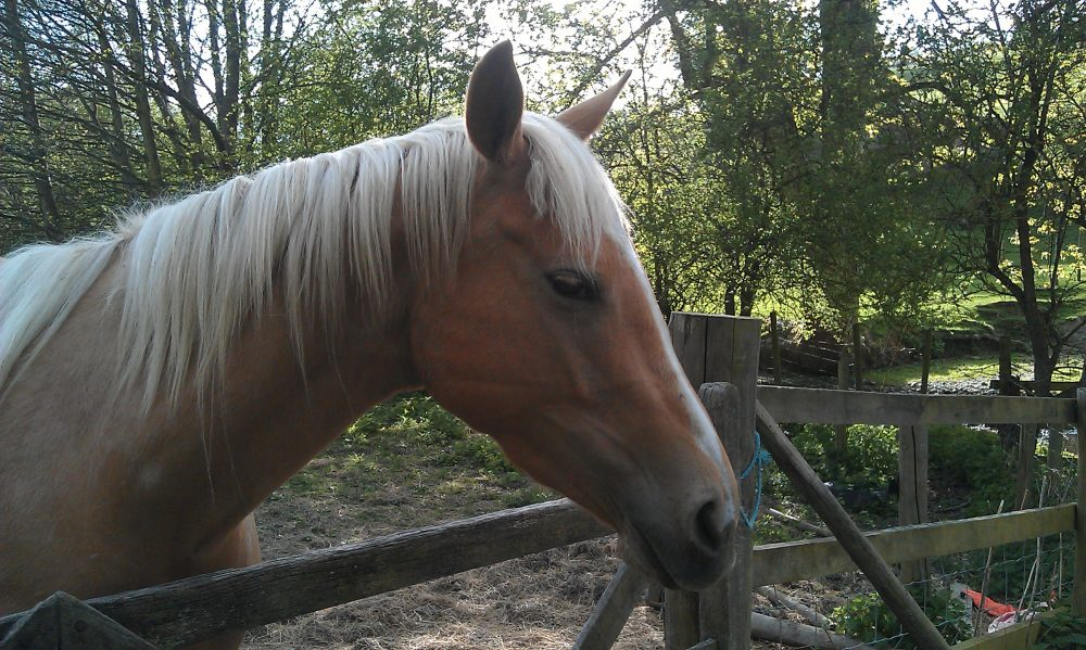 Horse, gate