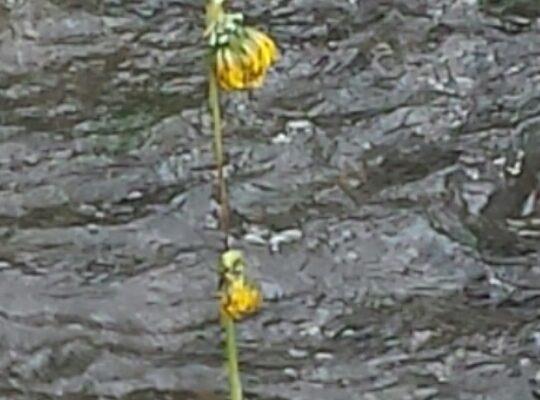 river decorating