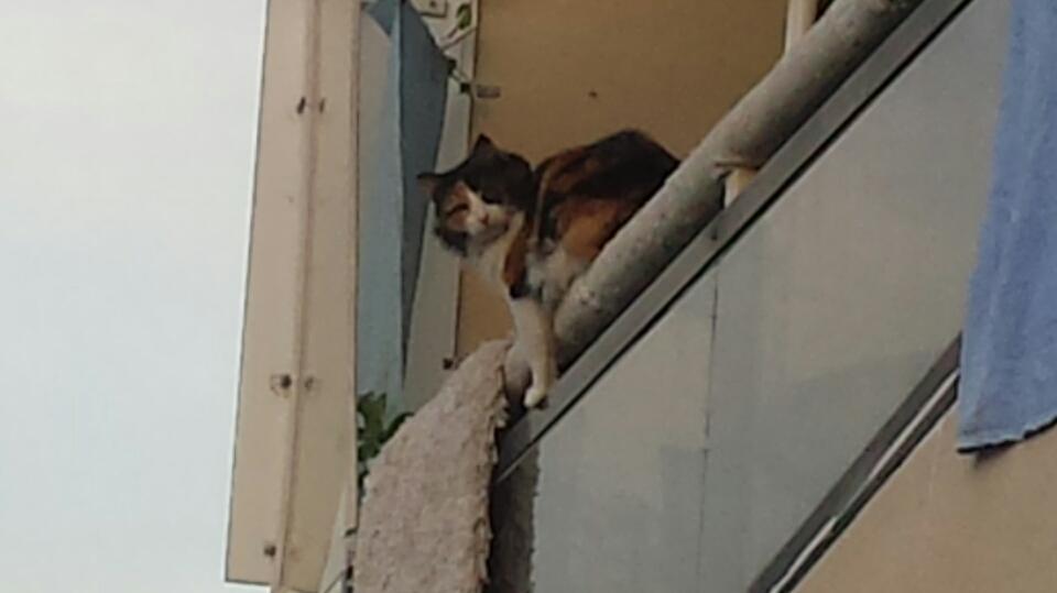 A cat Playing Big - curiosity didn't kill it!